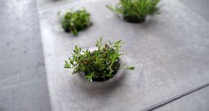 Vegetation stones  1