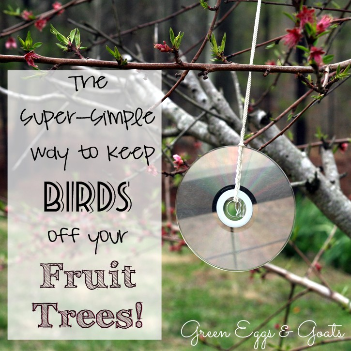 How To Keep Birds Off Fruit Trees