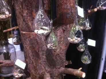 Eco Stems Hanging Plants