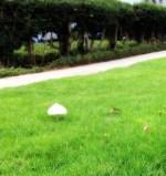A mushroom in the grass