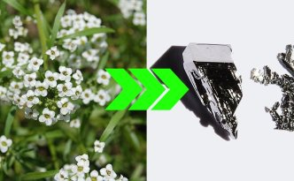 Alyssum to Platinum Process