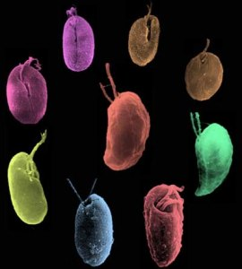Genome 270x300 Study of Algae Critical for Researchers to Understand Photosynthesis
