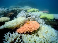 468366 The Great Barrier Reef Endangered as Australia Does Not Meet UNESCO Demands