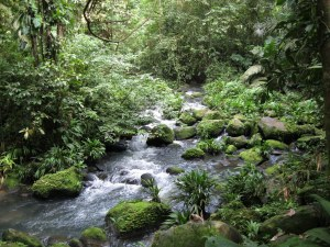 rocky gorge 300x225 Loss in Rainforest Could Lead to Drop of Hydropower Generation