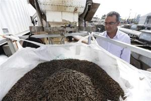 Israel Company Recycles Fiber Found in Sewage