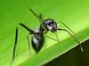 Bug Season… Ants