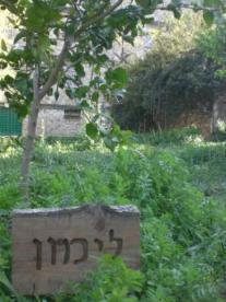 Bustan Brody, Jerusalem