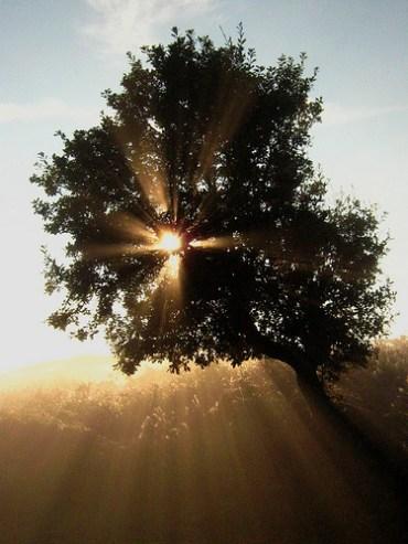 Eco Rabbi: Parshat Shemot – Why a Bush?