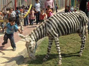 Gaza Zoo Paints Donkeys To Look Like Zebras