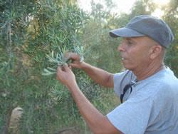 Negev Nectars Imports Israeli Organics