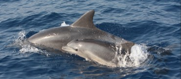 Commercial Fishing in Mediterranean Endangering Dolphins