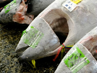 Frozen Fish vs. Phosphates Stirs Up A Government Reaction