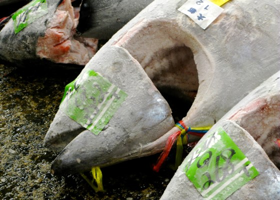 frozen fish japan china israel tuna photo