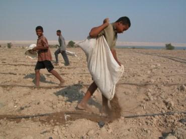 FoEME Helps Israel, Jordan Cut Down Flies