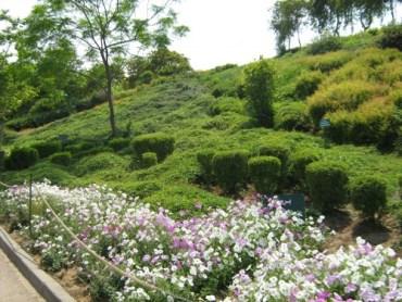 Cairo's Green Lung – Al-Azhar Park