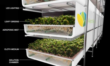 Vertical Farming in Masdar City? AeroFarms' Soil-less Solution