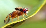 Make Bugs, Not Pesticides