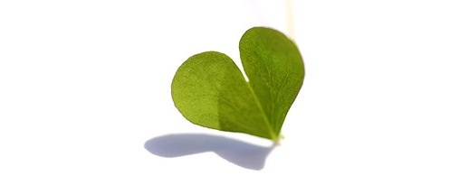 Forgot Valentine's? Green gifts save the day.