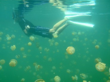 Tips Against Jellyfish Invasion For Israel and Lebanon Coasts