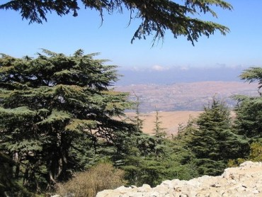 Can the Cedars of Lebanon Survive Climate Change?