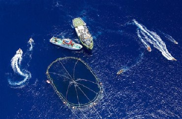 Clash Between Greenpeace Activists and Bluefish Tuna Fishermen in the Med Sea