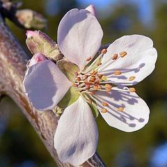Eco Rabbi: Man, the Tree of the Field