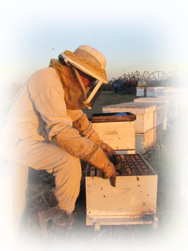 Bee Stings Are Sweet in Israel: An Interview with a Beekeeper