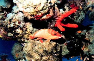 How Does Noise Pollution Impact the Red Sea?
