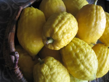 Don't Eat Your Etrog Unless You Know It's Organic