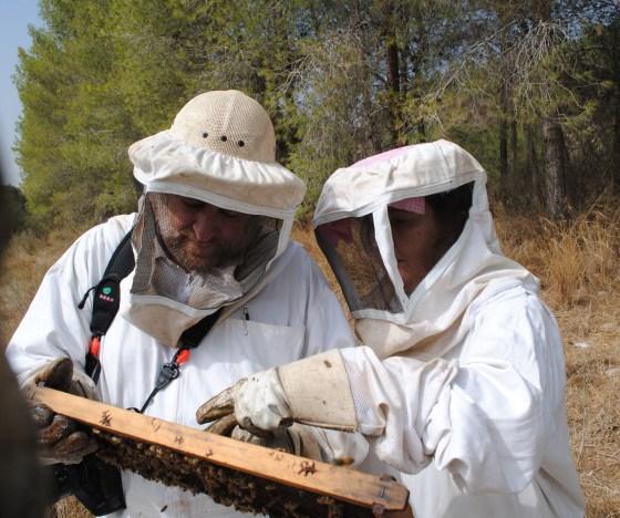 image-Epstein-bee-farm