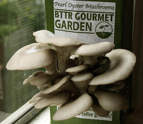 Mushrooms that Support Breast Cancer Research?