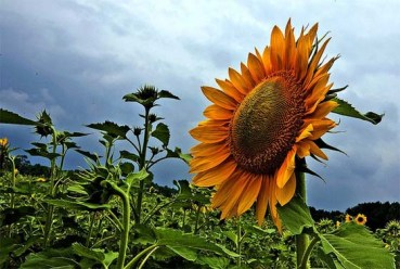 Sunflower Sustainable Investments Adds Three Italian Solar Farms