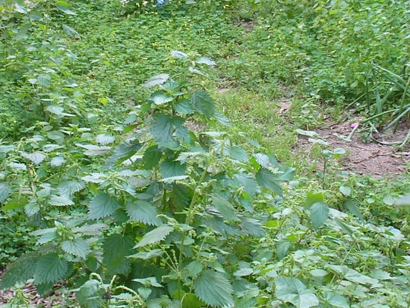Ethical Foraging Saves Native Flora