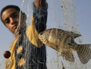 Governor Bans Recreational Fishing In Southern Sinai