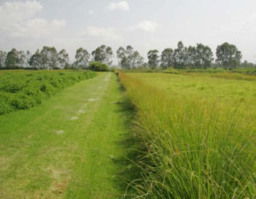 The Grass Is Greener In The UAE