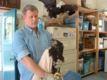 Why Starving Bald Eagles Are Dropping From the Sky