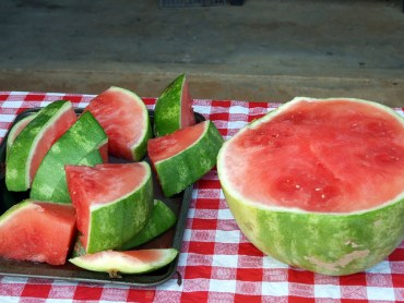 Watermelon Production In Jordan Threatened By Serious Virus