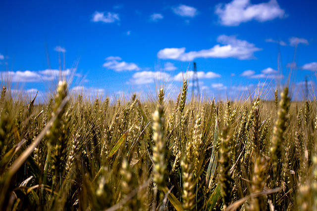 Algeria To Boost Its Food Security