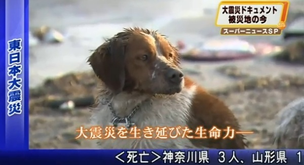 """Japan's Nuclear """"Dead Zone"""" Dogs and Cats"""