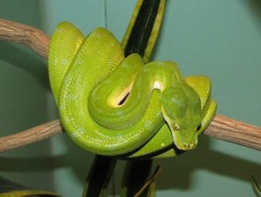 Was the Garden of Eden Snake Environmentally Unfriendly?