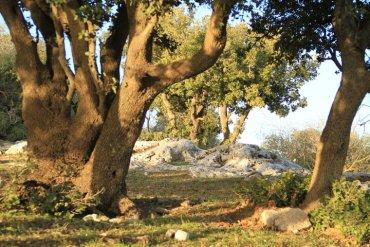 Trees In Jordan's Ajloun Forest Still At Risk