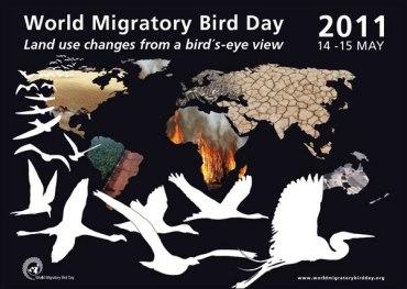 Nature Iraq Promotes World Migratory Bird Day