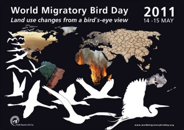 Nature Iraq Promotes World Migratory Bird Day