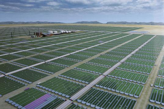 Origin Oils Algae Should Inspire More Mid East Biofuels