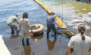 Oil Spills Near Coral Reef in Israel Cleaned Up, This Time