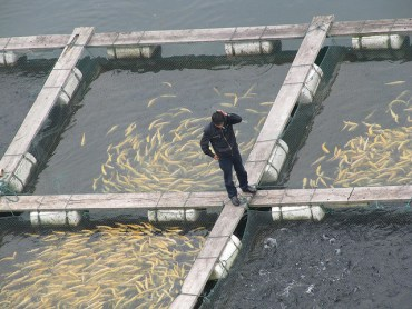 Fish Farming Isn't So Evil After All