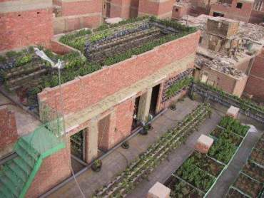 Egypt's Urban Agriculture Movement is Growing!
