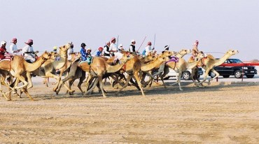 15 Racing Camels in Qatar Killed by Toxic Pesticide