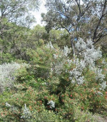 Israel's Ramot Menashe Woodland New UNESCO Biosphere Reserve