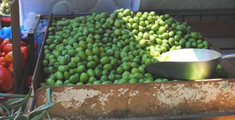 Picking Olives for Pickling